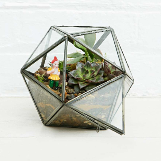 Top 10 Terrariums
