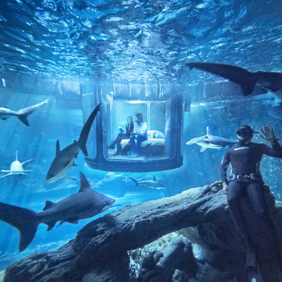 Study Room With Aquarium: Airbnb Launches First Ever Underwater Bedroom In A Shark Tank