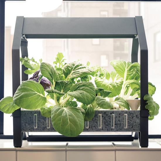Ikea House Kit: Ikea Launches Hydroponic Indoor Gardening Kit